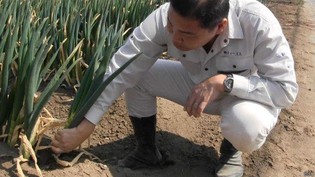 Imigrante brasileiro vira o rei da cebolinha no Japão