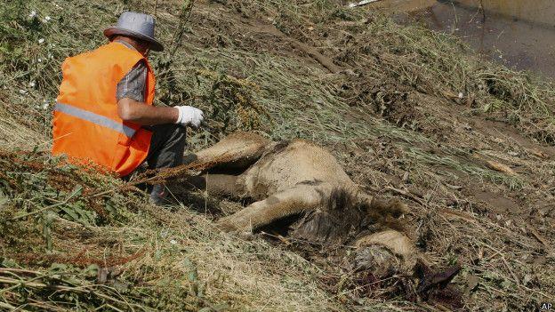 León muerto en Tiflis