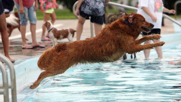 Un perro salta a una piscina