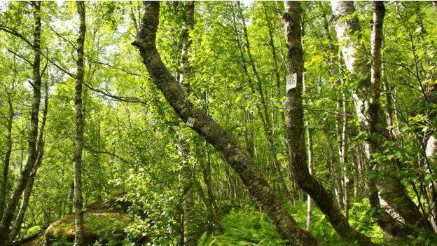 Bosque en Noruega