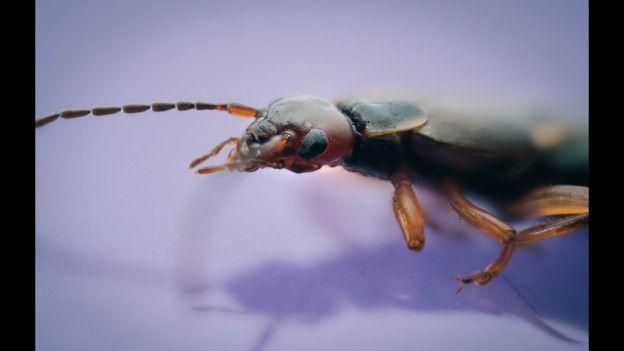 Galería de insectos