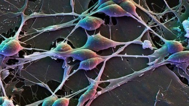 человеческие нейроны