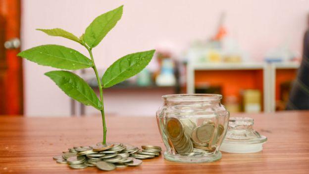 Unas monedas y una plantita