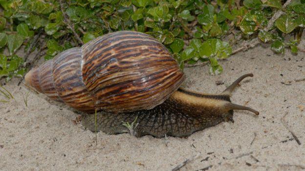 151218180927_vert_pragas_7_640x360_npl_nocredit Pragas: conheça aglomerações de animais em proporções gigantescas Curiosidades