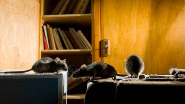 151218182048_vert_praga10_640x360_laurentgeslinnpl_nocredit Pragas: conheça aglomerações de animais em proporções gigantescas Curiosidades