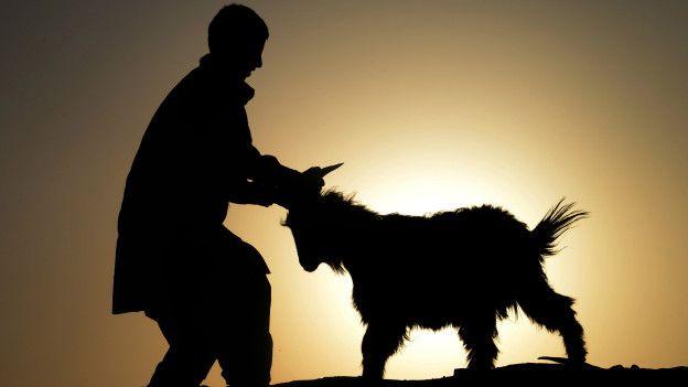 Афганец и коза