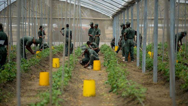 Militares siembran en Venezuels