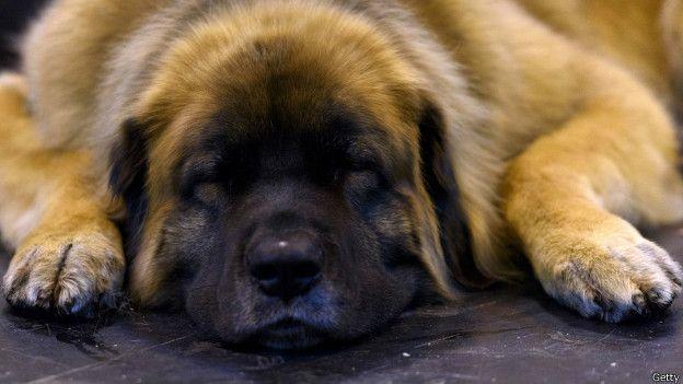 Un perro que duerme