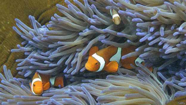 Peces y coral en la Gran Barrera de Australia