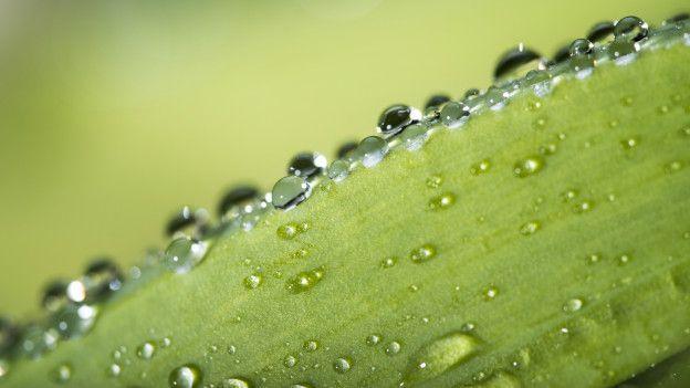 A través de la fotosíntesis, las plantas obtienen minerales y nutrientes.
