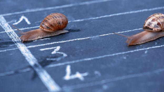 Dos caracoles en una carrera