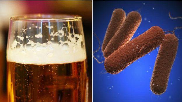 ¿Tiene el lúpulo de la cerveza propiedades antimicrobianas?