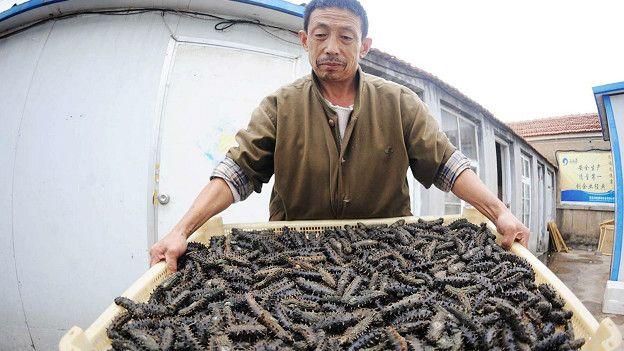 Морские огурцы: для азиатов главное - текстура