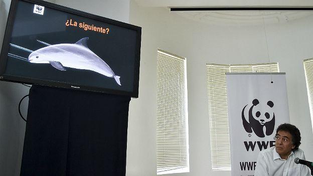 Omar Vidal, Director General del Fondo Mundial para la Naturaleza en México