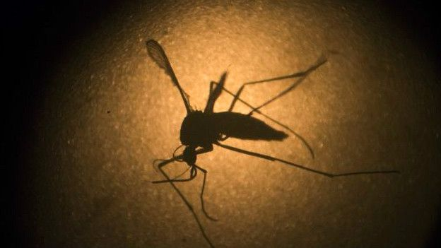 Mosquito transmisor del zika