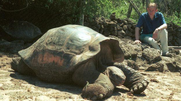 Las tortugas gigántes son una de las principales atracciones de las Islas Galápagos.