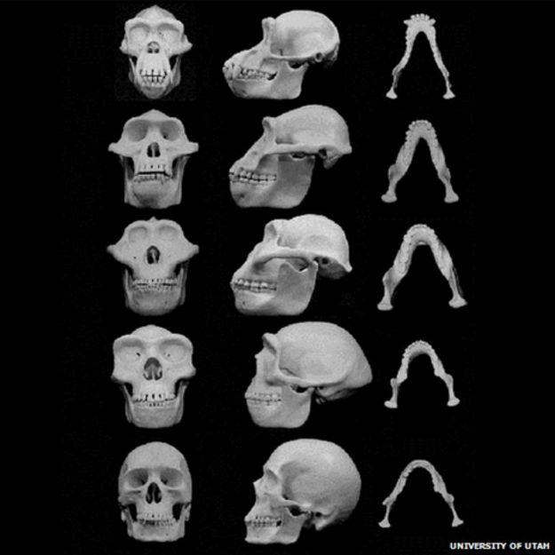 Evolución humana - Magazine cover