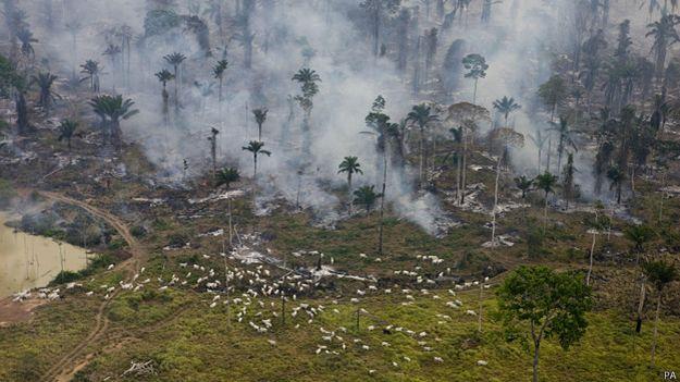 Brasil rechaza pacto de deforestación firmado por 30 países