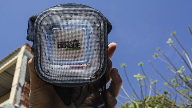 Caja plástica con mosquitos