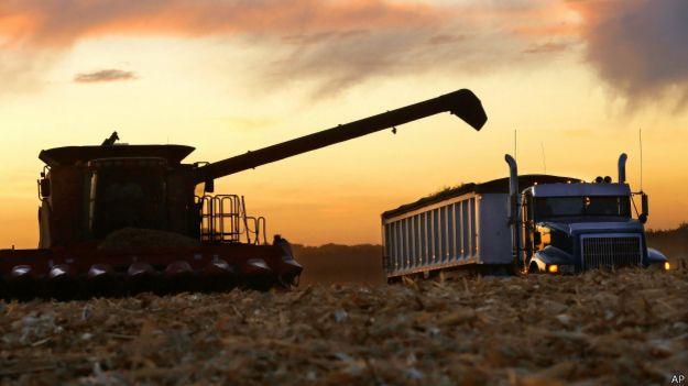 Tractor en un campo de cultivo de maíz.