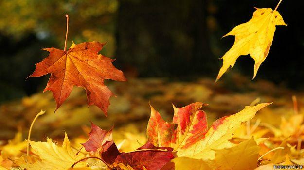 Carpe diem educaci n ambiental noviembre 2014 for Arboles que no se le caen las hojas en invierno