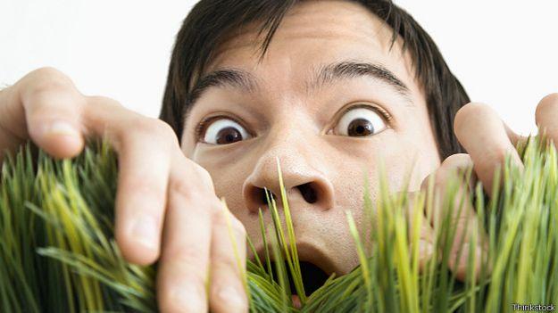 Человек удивленно выглядывает из травы