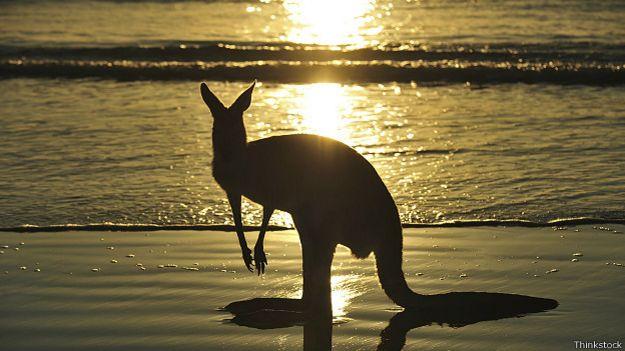 Австралийский кенгуру на берегу океана