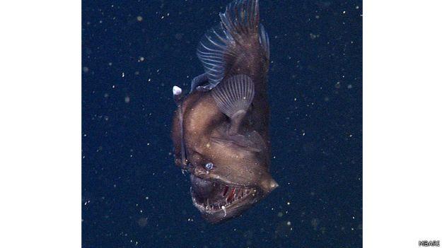 Diablo negro del mar