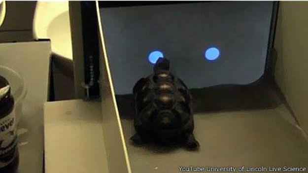 Черепаха перед экраном