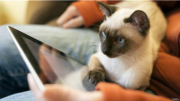 Сиамская кошка с iPad