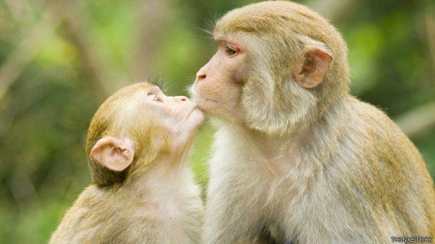Monos besándose