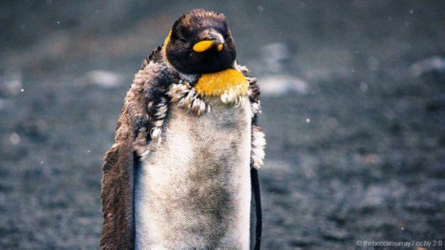 морские котики и пингвины