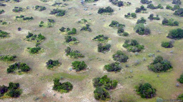 Vegetación sobre termiteros