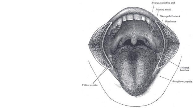 Boca humana