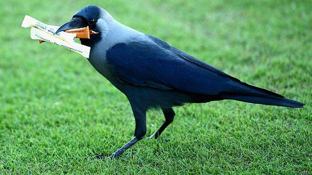 Ворона с пакетиками сахара