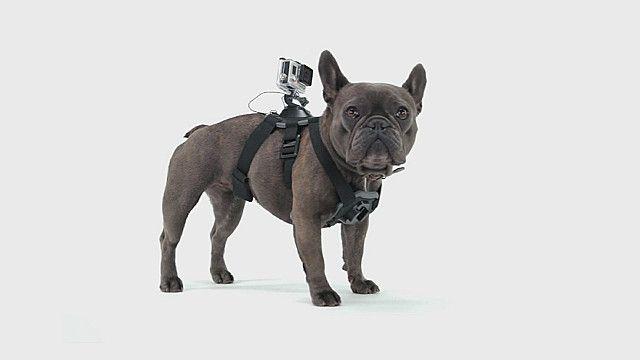 Perro con cámara