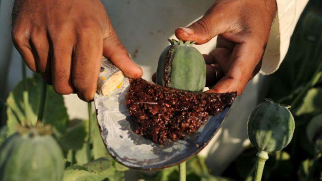 Семена мака как садить