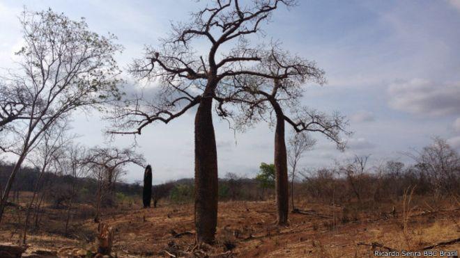 Paisaje de arboles y campo secos debido a la falta de lluvias en Brasil.