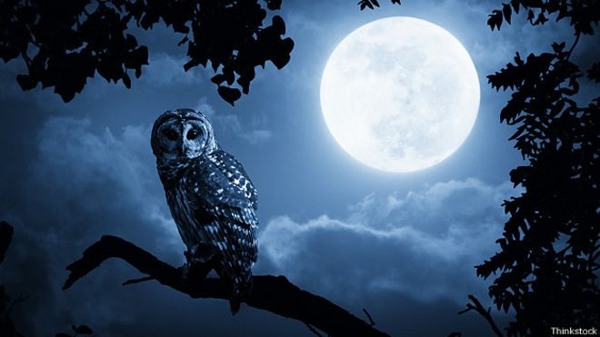 141117163407_mad_full_moon_owl_624x351_t