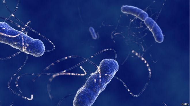 Bactéria e. coli