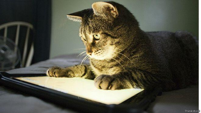 Кошка с планшетом