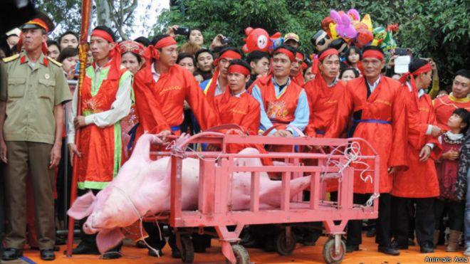Lễ hội Chém lợn tại làng Ném Thượng. Ảnh: Tổ chức Động vật châu Á cung cấp