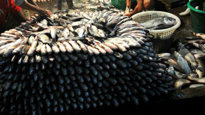 টানা অবরোধে সঙ্কটে মাছ ব্যবসায়িরা