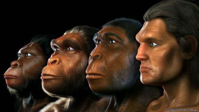 Linha evolucionária humana