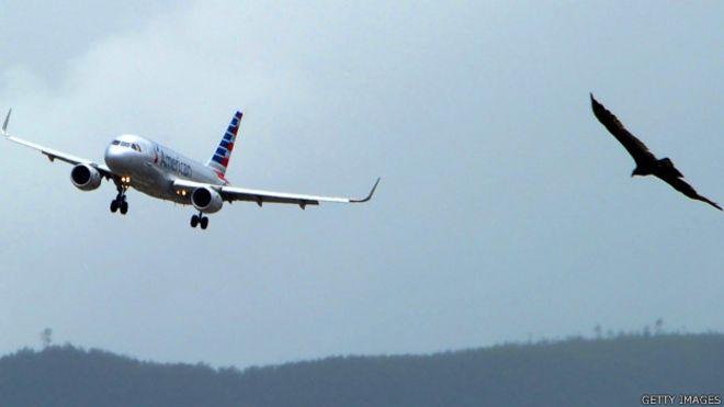 Avión y pájaro