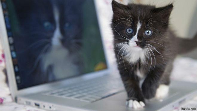 Котенок и компьютер