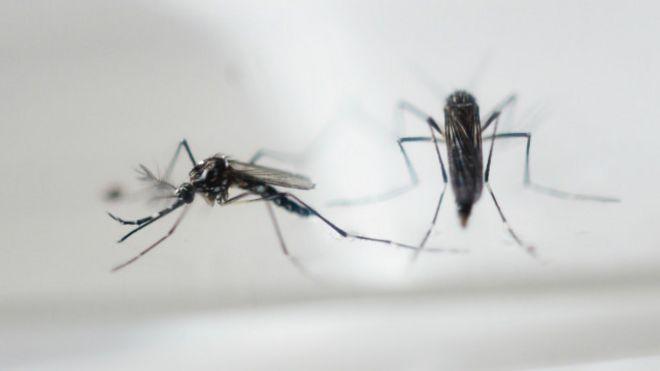 Mosquitos são os animais que mais matam no mundo