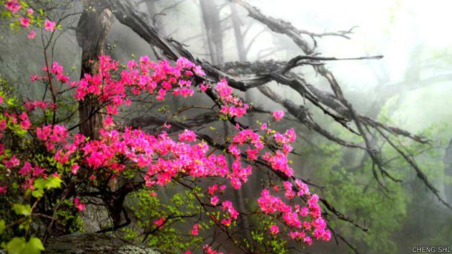 Bir yılda iki bini aşkın yeni bitki türü keşfedildi