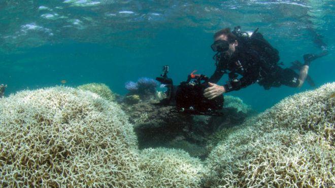 Buzo observa la Barrera de Coral