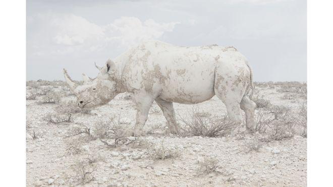Un rinoceronte se confunde con el paisaje